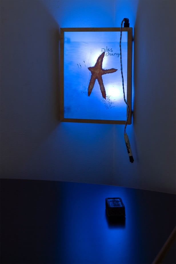 starfish inside a whiteboard